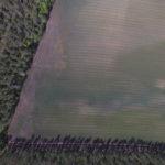 Tästä dronen ottamasta kuvasta voi tarkastella, miten oras on pellolla lähtenyt kasvuun. Kuva: Henna Hyttinen.