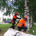 Mika Issakinen (vas.) ja Marko Parkkinen taitavat myös puunkaadon.