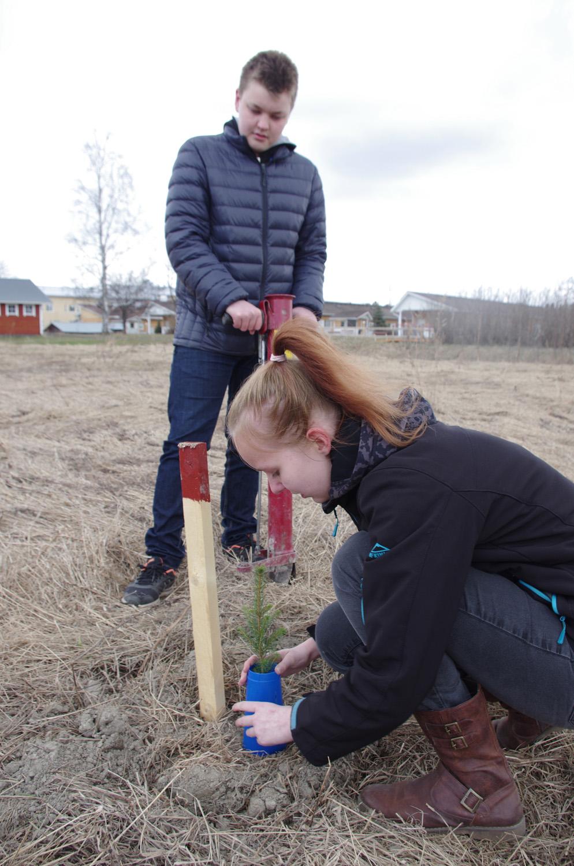 Toni Voutilainen ja Heidi Karhunen istuttivat kaksi tulevaisuuden kuusta Koulutien varteen.