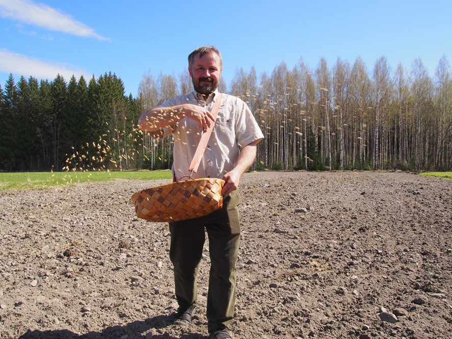 Pasi Laasonen nakkeli siunatun viljan peltoon.