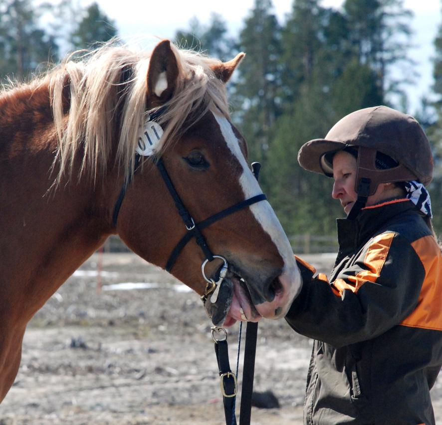 2-vuotias suomenhevosori Santer arvosteltiin ratsusuunnan varsana.