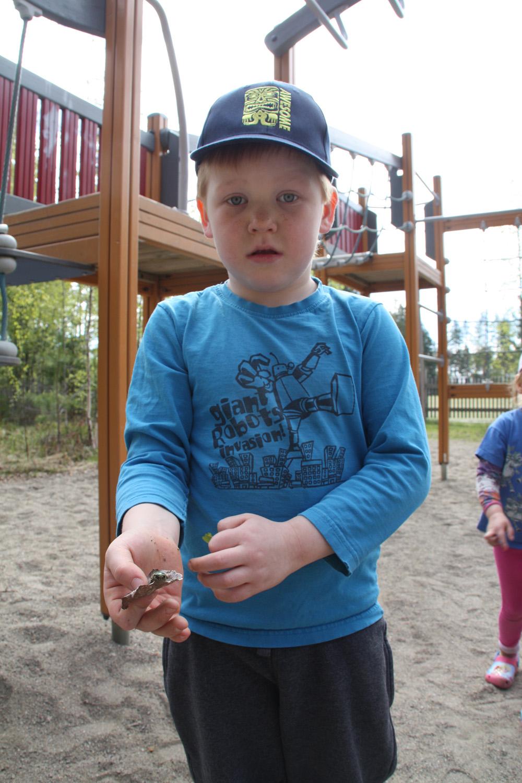 Niko löysi leikkipuistosta kultakuoriaisen, joka siirrettiin turvaan lähimetsään.