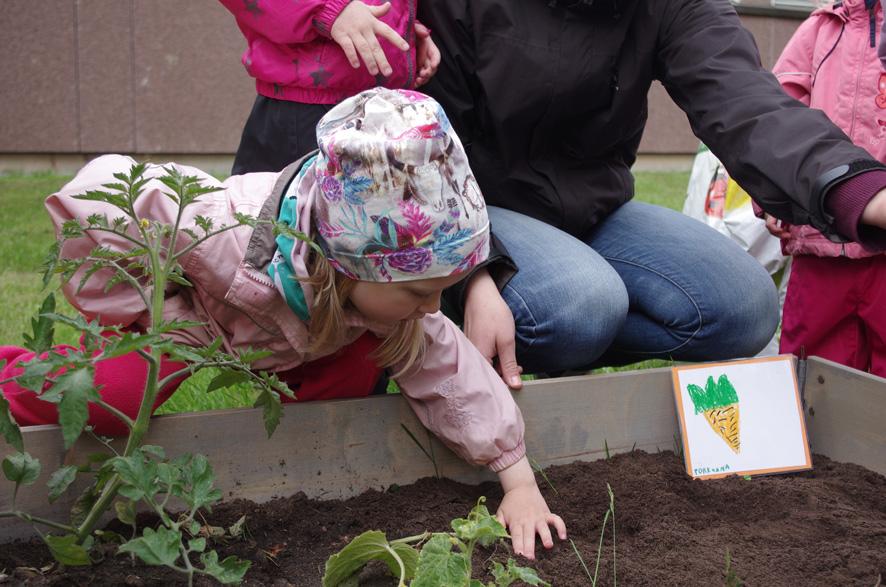 Porkkanansiemenet on upotettu multaan. Nyt vain odotellaan porkkanaraasteen kasvamista.
