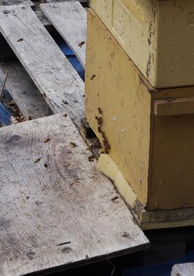 mehiläiset nettiin