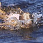 Summer Bucket -listalle voi kirjata vaikka luonnonvesissä uimisen.