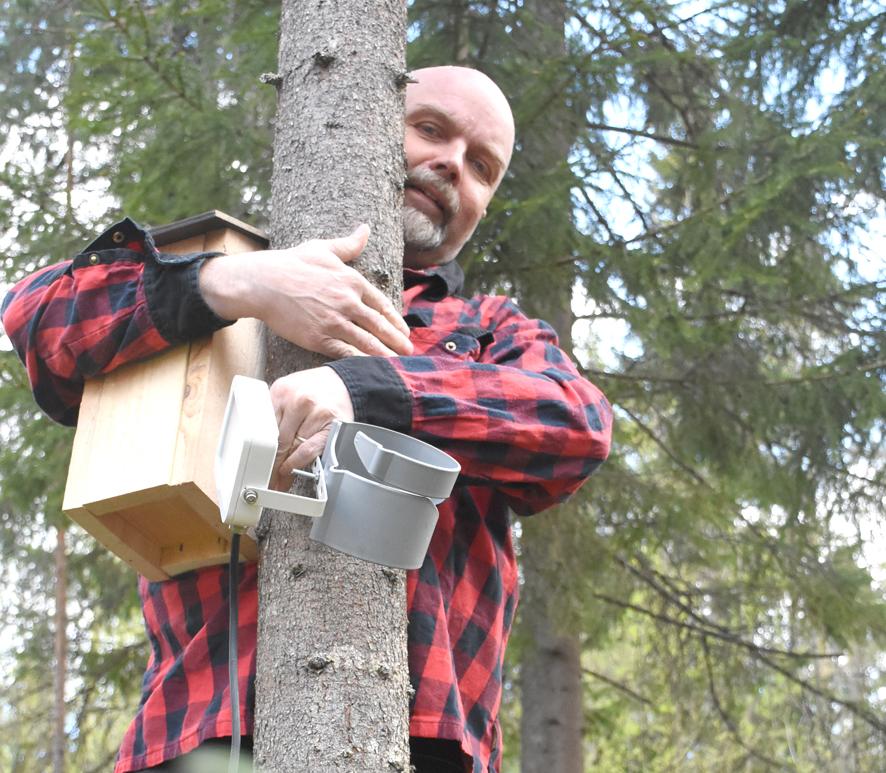 Matti J.Yrjänän halain on monipuolinen tuote, jolla puuhun voi kiinnittää vaikka linnunpöntön tai valon.