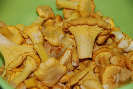 Sienten koko ei vielä päätä huimaa. Kuva: Päivi Lievonen