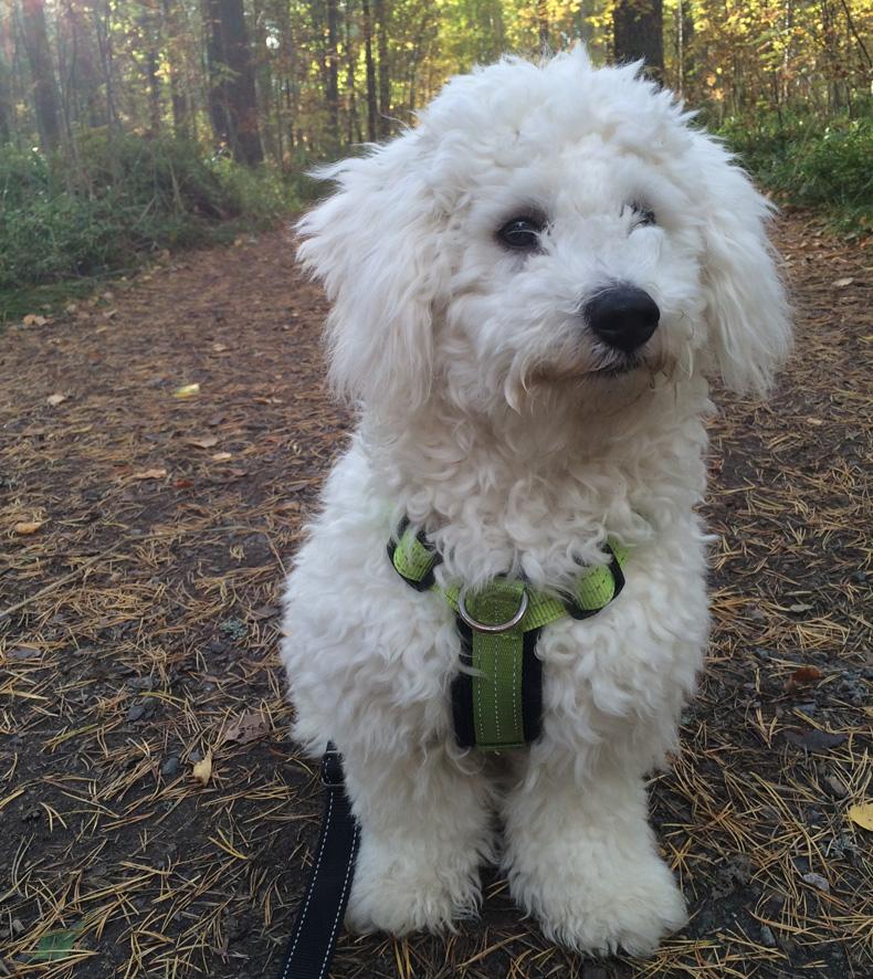 Lemmikkiä lenkittäessään on paras pitää mukana koirankakkapusseja.