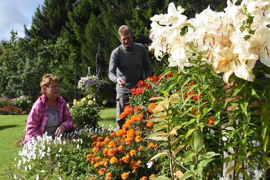 Aila ja Tapio Ikosen pihan kukkaloisto jatkuu vielä syyskuun puolivälissä.