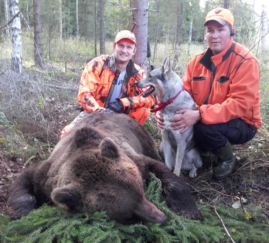 Tomi Haaranen kaatoi karhun lauantaina Leppälahdessa. Kuvassa oikealla Markus Mononen koiransa Eteläselän Oonan kanssa. Kuva: Satu Tolvanen