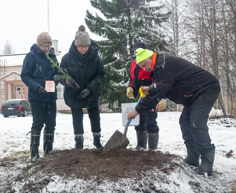 Tuula, Sari, Toivo ja Tuure Hirvonen istuttivat tulevaisuuden kuusen Varpasalon kylätalon pihaan.