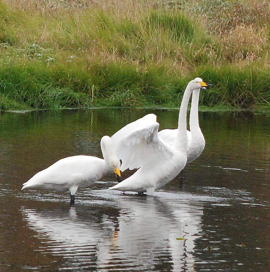 Juuri nyt on hyvä aika seurata lintujen muuttopuuhia.