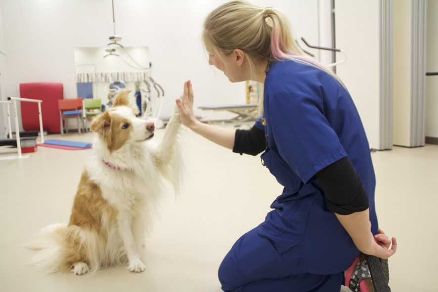 Koira Fysioterapia
