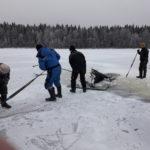 Varpasalon erän metsästäjät nostivat hukkuneen uroksen lauantaina pois järvestä. Kuva: Yrjö Eronen